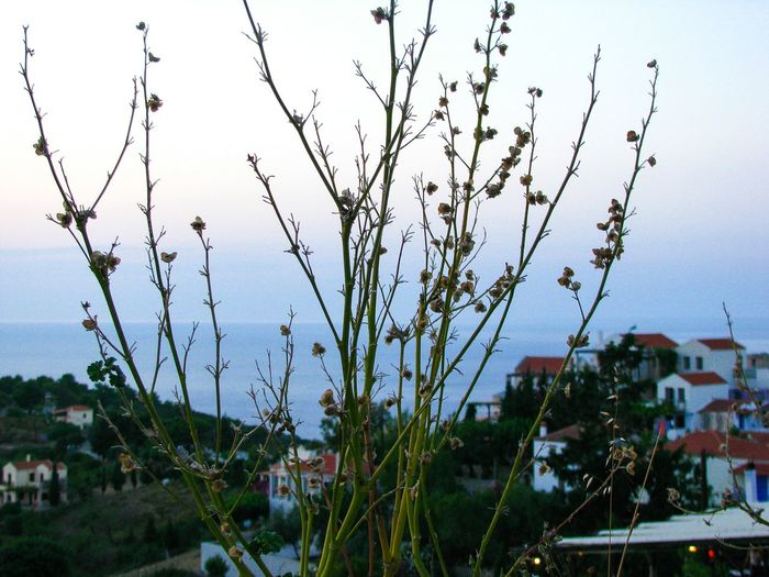 greek islands Reeds Greek Islands Alonnisos Island Village Greek Village Greece Vacations Holidays Summer Water Sky Plant