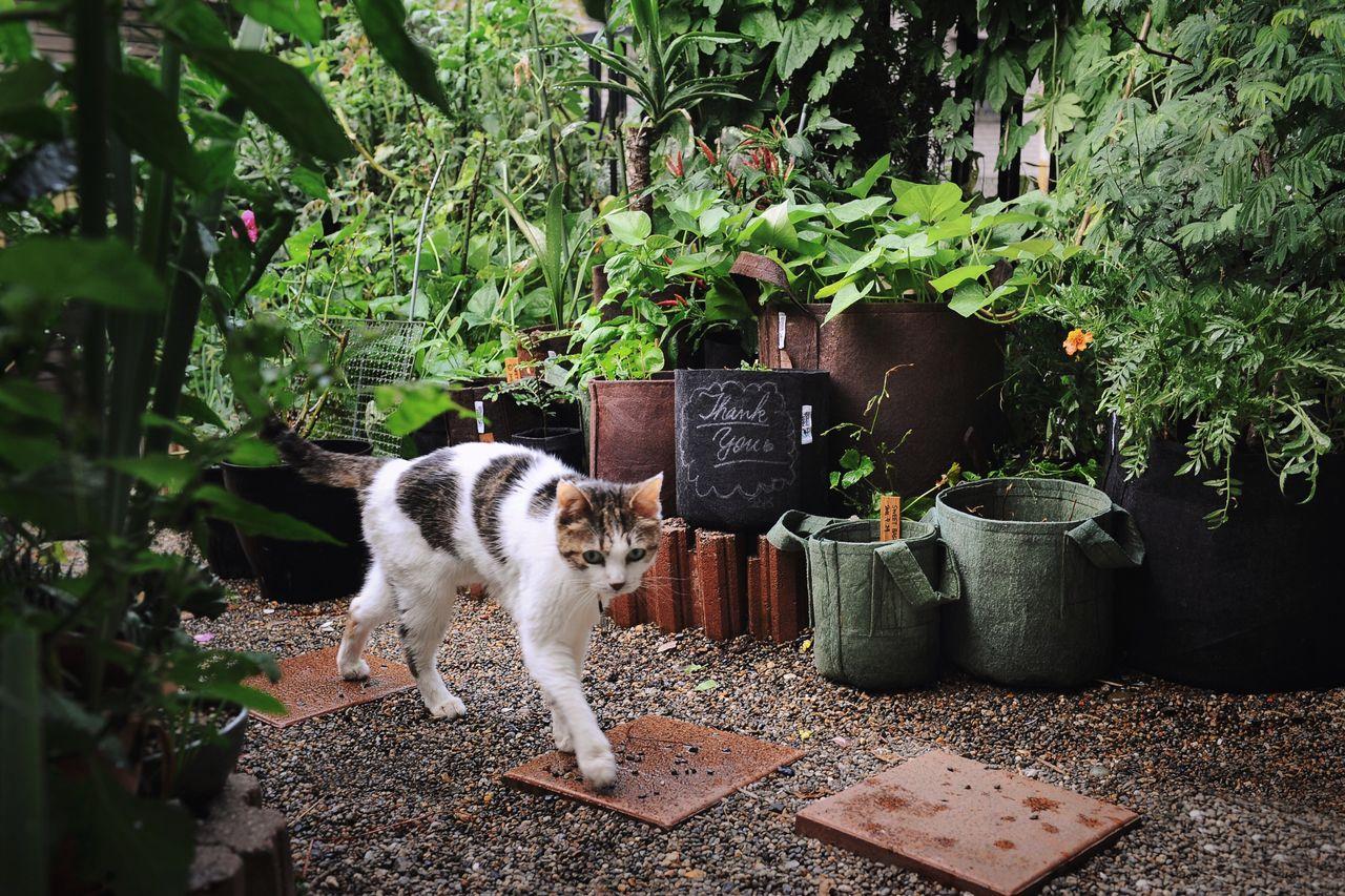 Cat Walking By Plants