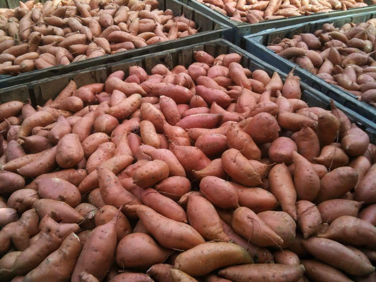 Sweet potatoes in bins ready for sale. Sweet Potatoes Bins Storage Abundance Choice For Sale Large Group Of Objects Agriculture Farming Farm Life Food No People Market Stall Business Freshness Market