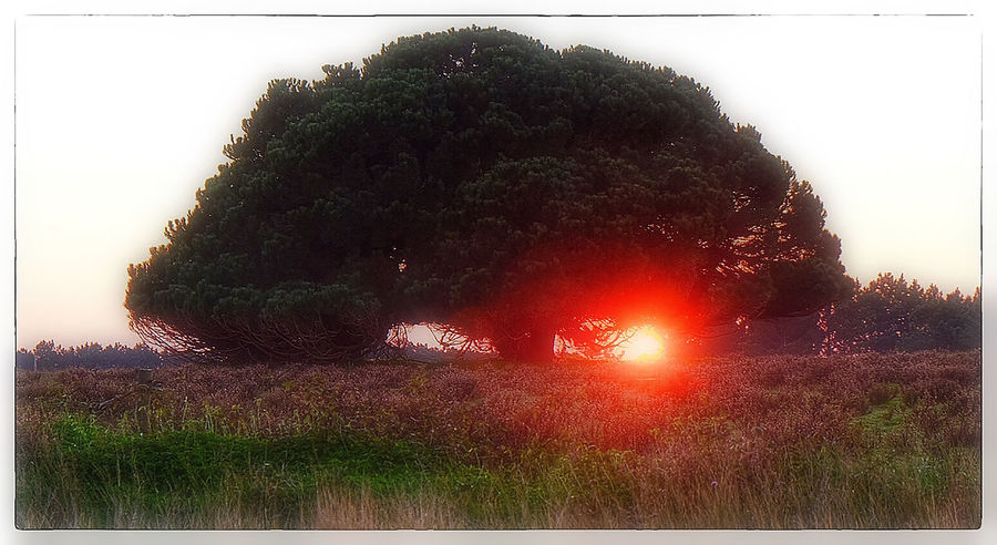 Atmosphere Beauty In Nature Glowing Heat Light Nature Night No People Outdoors Scenics Shiny Sundown Tranquil Scene Tranquility Tree Silhouette Tree Sunset Nature's Diversities