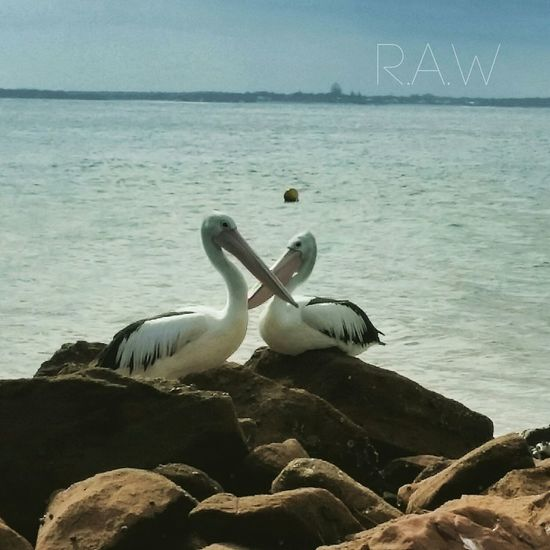 Nature On Your Doorstep Portstephens RAWphotography Beautiful Nature Seaside_collection