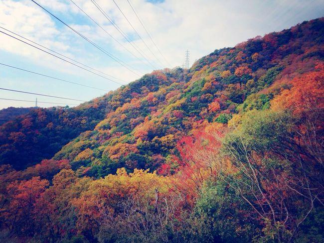 Fall Colors Walking Around RedLeaves Nature Cool Japan Trailrunning