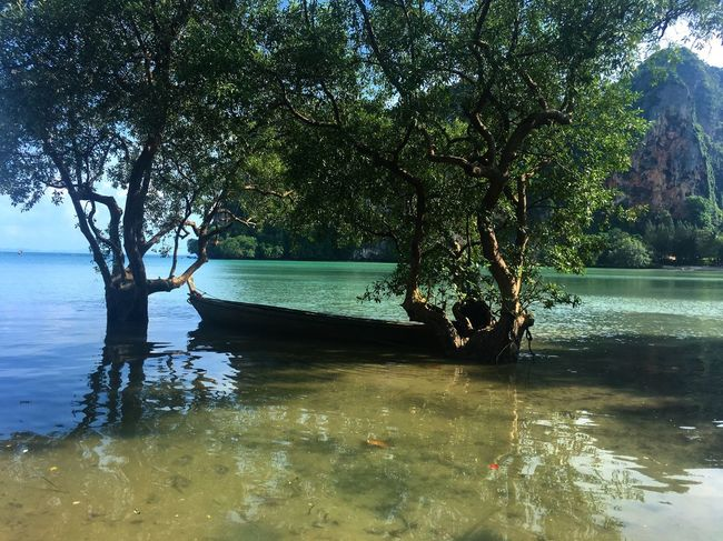 Tailandia Tree Nature Water Beach Beauty In Nature Scenics Growth Tranquility Outdoors No People Day Sky Railey Beach Railey Beach - Perfect Perfection Clear Water Blue Green Roots Roots Of Tree Mangue  Boat EyeEmNewHere The Week On EyeEm Been There.