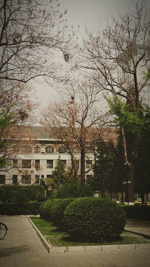 杨絮-暴雨-乌鸦 偶一回头 就快走到终点. My University Daydreaming TODAY April