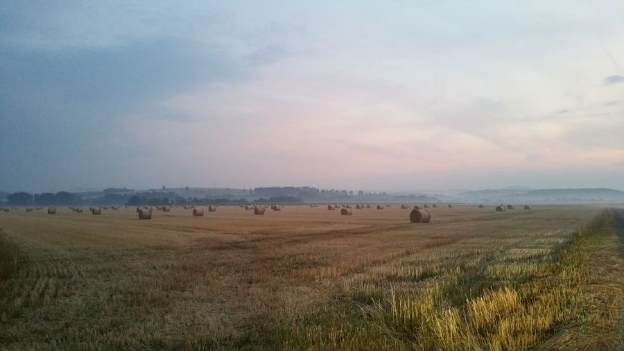 Yesterday evening this is what I saw just around the corner from where I live. Eichsfeld Germany Rural Scene Agriculture Sunset Field Sky Grass Landscape Bale  Hay Farm Hay Bale Agricultural Field Cultivated Land Straw Countryside Harvesting Farmland Horizon Over Land