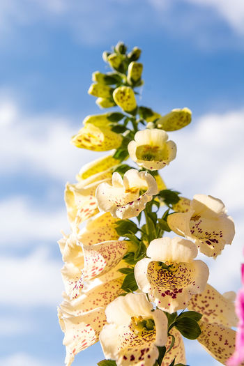 Close-up of white flowering plant against sky