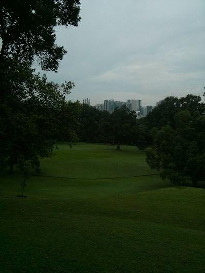 Istana Park, Singapore. · Green Park Urban Nature City Oasis City Planning