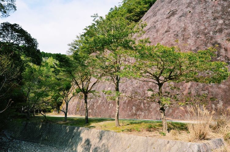 Japan Japan Photography Travel Japan Travel Spring Outdoors Tree Plant Growth Nature Beauty In Nature Scenics - Nature Landscape Tranquil Scene Rock Monolith Environment Tranquility No People