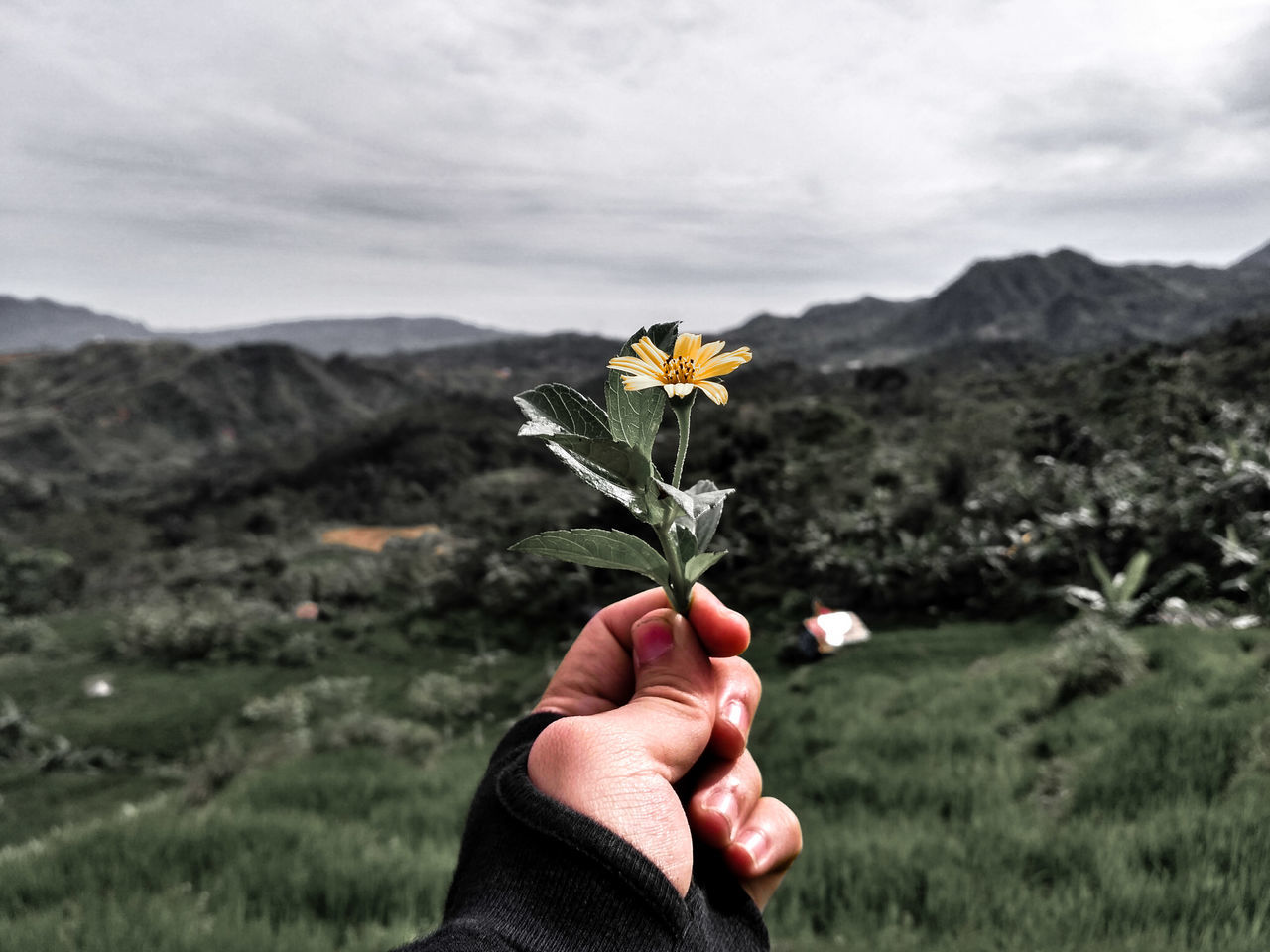 Close-Up Of Hand Holding Flower On Field Against Sky