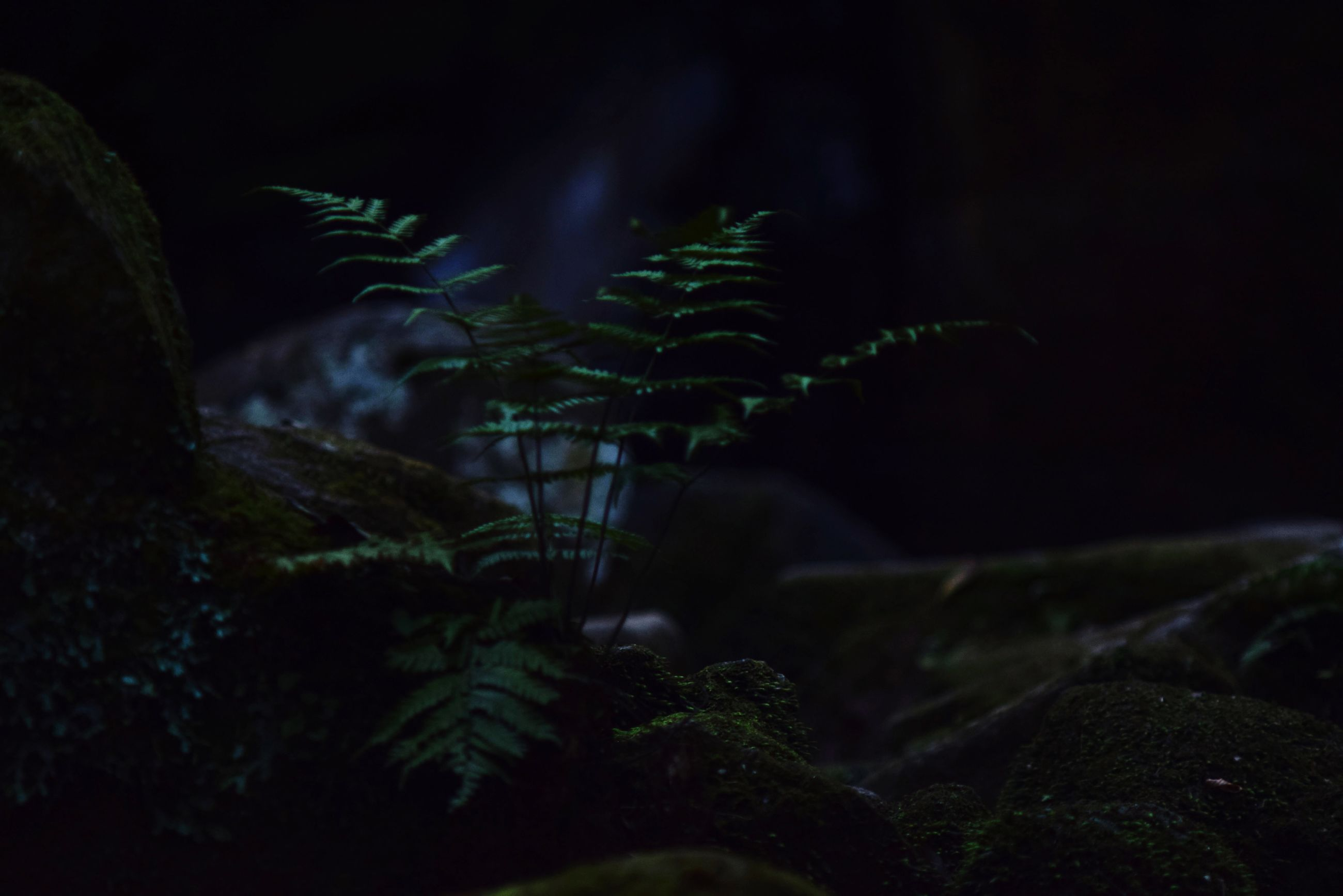 night, growth, plant, leaf, green color, nature, close-up, selective focus, dark, tranquility, beauty in nature, focus on foreground, outdoors, forest, no people, growing, tree, moss, rock - object