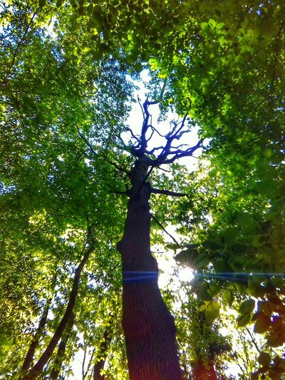 Tree Growth Green Color Nature Day Outdoors No People Sunlight Branch Shadow Beauty In Nature Belgrade Sky Istanbul Green Color Nature Forest Flower Plane Tree Tress Leaf Greenleaf Photooftheday Turkey Turkeyphotooftheday