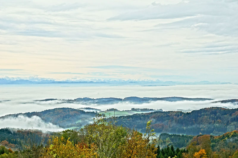 Alps Autumn Autumn Colors Beauty In Nature Cloud - Sky Day Fog Foggy Morning Hoechsten, Lake Constance, Germany Lake Constance Lake View Nature Outdoors Sky Tree Tranquility Scenics Tranquil Scene No People Landscape