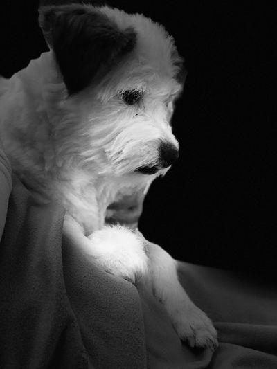 Street Dog CHINA Jimmy Indoors  One Animal Mammal Looking Away Portrait Headshot Dog Black Background Pets