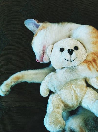 Tabby sleeping soundly. With her favorite toy. Teddy Bear Catsagram Our Pet