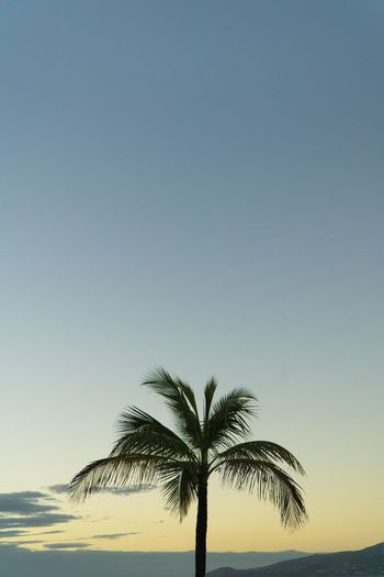 Cliché Caribbean Holiday Palm Dusk Sunset Minimal Minimalism Sky Palm Tree Tropical Climate Plant Tree Copy Space Beauty In Nature Growth Nature Tranquility No People Scenics - Nature Clear Sky Tranquil Scene Sunset Low Angle View Leaf Silhouette Outdoors Idyllic Stay Out Springtime Decadence The Minimalist - 2019 EyeEm Awards