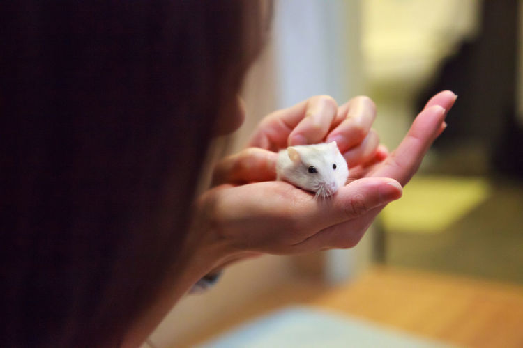Close-up of woman holding white mouse at home