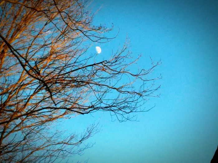 Day Moon Moon Through The Trees Reaching For The Moon Showcase: November Looking Up
