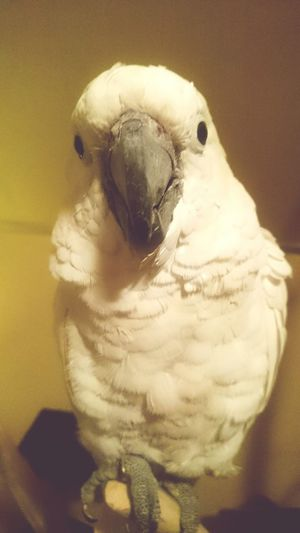 Animals its Rio the Parrot