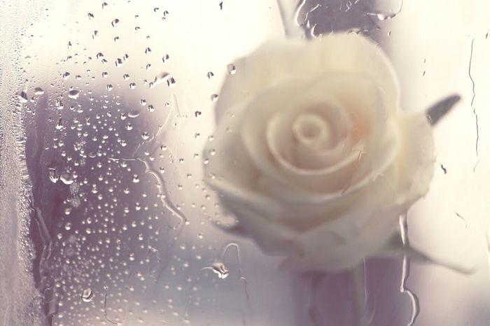 Flowers Spring Water Drops Macroclique Macro_collection Macro Photography Bokeh EyeEm Best Shots Popular Popular Photos