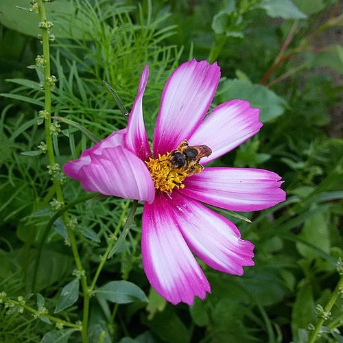 Flower and Bee Flower Nature Bee Igerscampania Igerssalerno Igersitalia Igersoftheday Vallodidiano Follower Photooftheday Sassano Instagood Instalike Instalife Instanature Gardens Green Pink Yellow @igersitalia @igerscampania @igers_salerno @natgeo