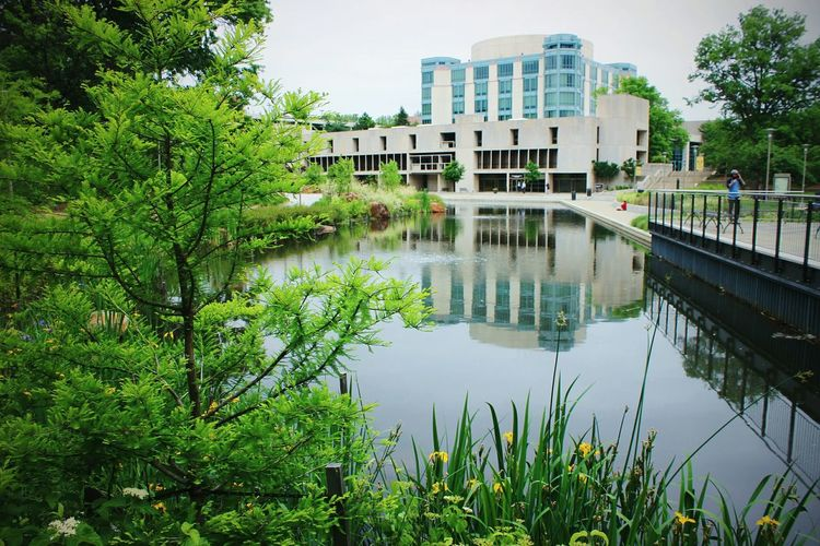 Library Pond Springtime Library Pictures Pond View Umbc College Campus Clouds Aok Nature Photography Trees Green Urban Landscape Buildings Architecture Buildings & Sky Exterior View Walls Lightning Reflections In The Water Land Streetphotography Student Life Yellow College Life Colors First Eyeem Photo