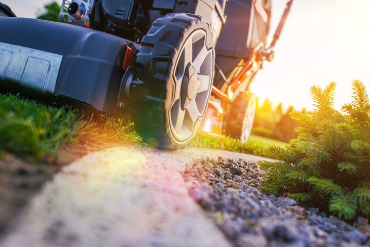 Lawn Mowing Closeup Photo. Professional Landscaping Works. Grass Cut. Field Gardening Close-up Day Garden Grass Lawn Mowing Low Section Mower Nature No People Outdoors Selective Focus Sunlight Sunset Surface Level Tool Transportation Wheel