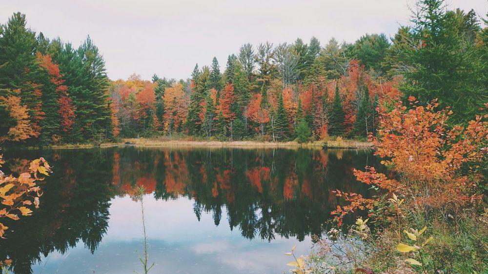 reflect SonyNEX5n Vscocam #vsco Cottage Forest Muskoka Bracebridge