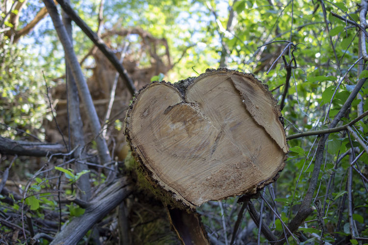 Wood Nature Tree Day Woods Outdoors Heart Design Forest Shape Plant Land Growth Heart Shape Branch Close-up WoodLand Log No People Timber Deforestation Focus On Foreground Wood - Material Environmental Issues Heart ❤