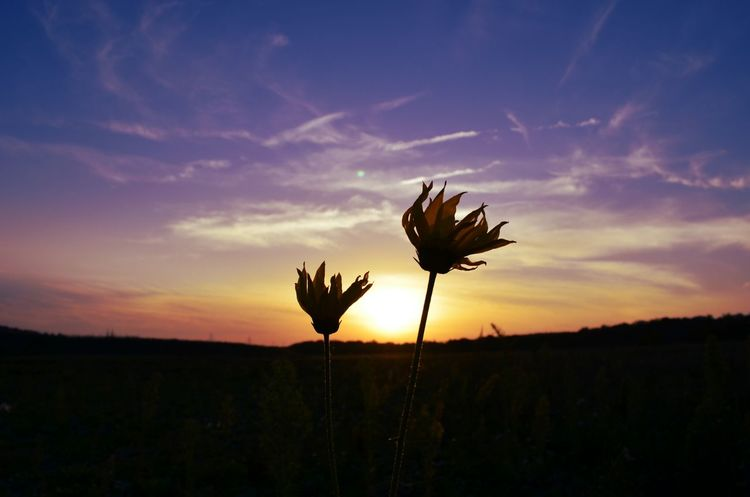 Sunsetlover Naturelovers Nature_collection Take A Walk