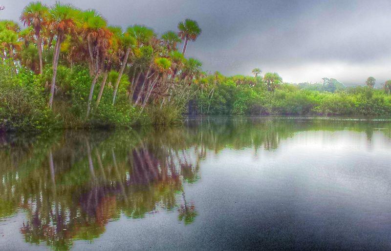 Grey Morning at the St Sebastian River, Sebastian, Fl Palm Trees Water Reflections St Sebastian River Preserve State Park