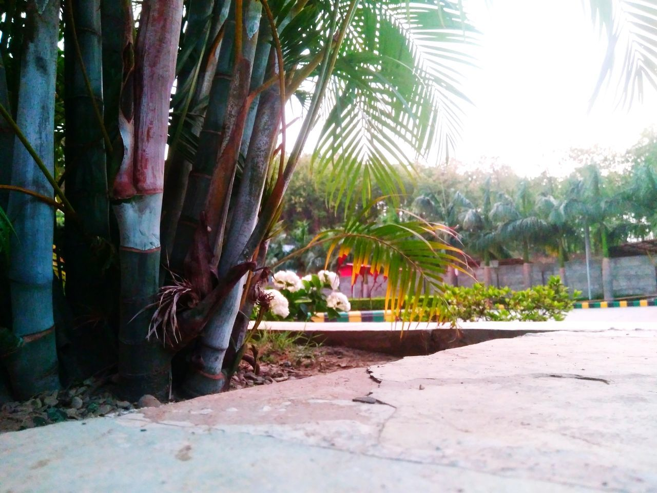 tree, growth, no people, plant, nature, day, palm tree, outdoors, sunlight, beauty in nature, flower, close-up