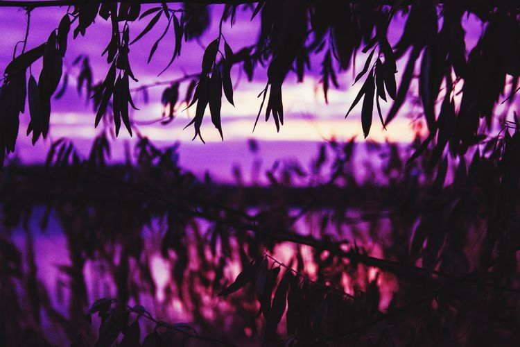 Sunset celebrate Purple Nature Beauty In Nature Plant Growth Outdoors No People Tree Flower Close-up Day Freshness Sky Night Sunset Nature Tree Beauty In Nature Water Focus On Foreground Sunrise
