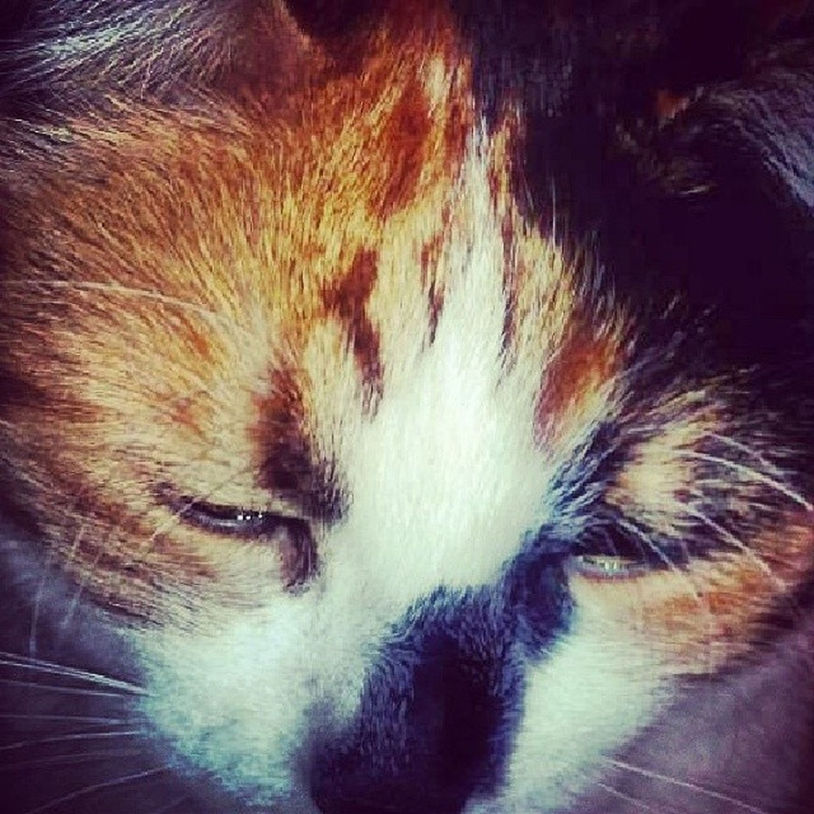 one animal, animal themes, domestic animals, mammal, pets, indoors, close-up, domestic cat, cat, animal head, animal body part, animal hair, whisker, feline, sleeping, relaxation, high angle view, no people, eyes closed, part of