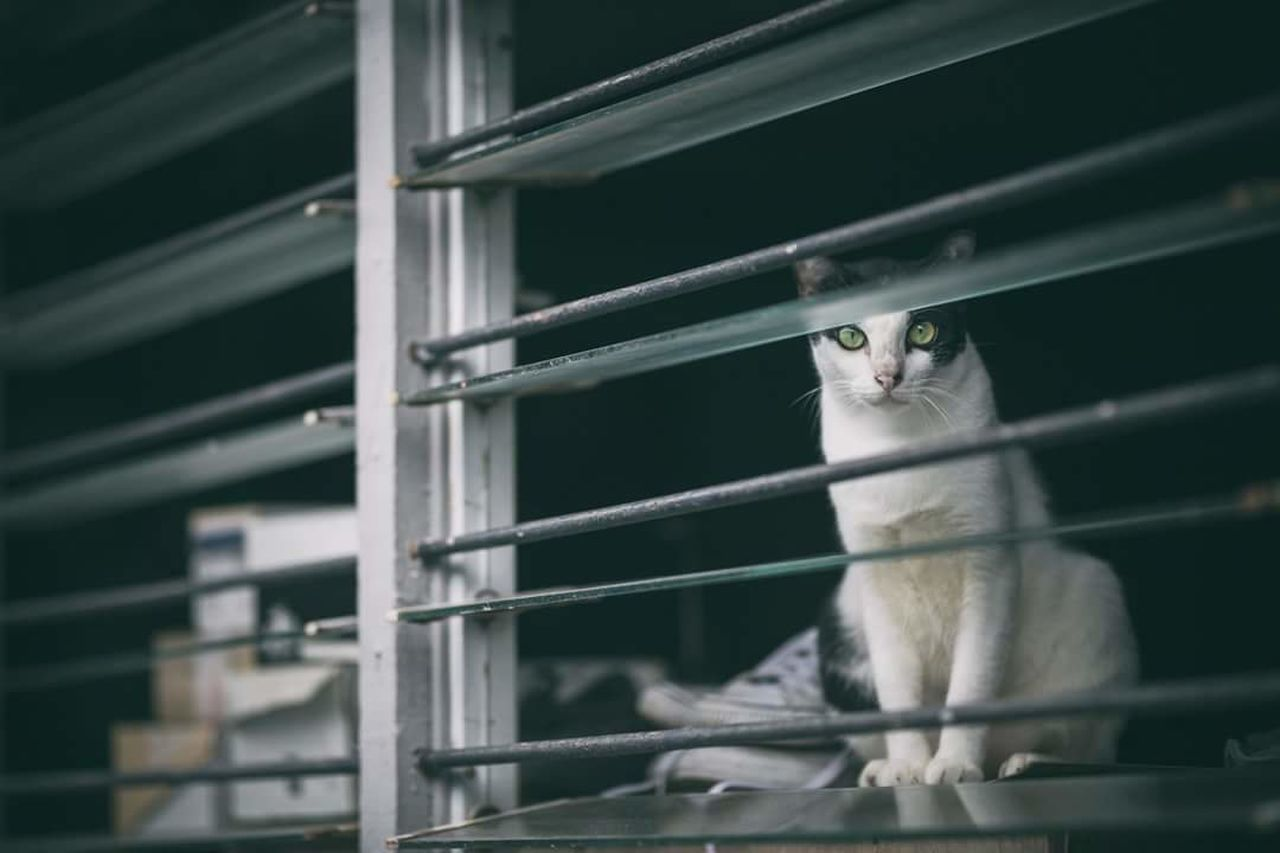 mammal, domestic cat, one animal, animal themes, feline, domestic animals, pets, indoors, no people, day, close-up