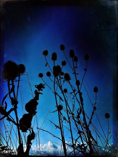 Low Angle View Silhouette Growth Blue Plant Stem Nature Beauty In Nature Fragility Tranquility Flower Springtime In Bloom Tranquil Scene Outdoors Blue Color Scenics Day Vibrant Color Sky