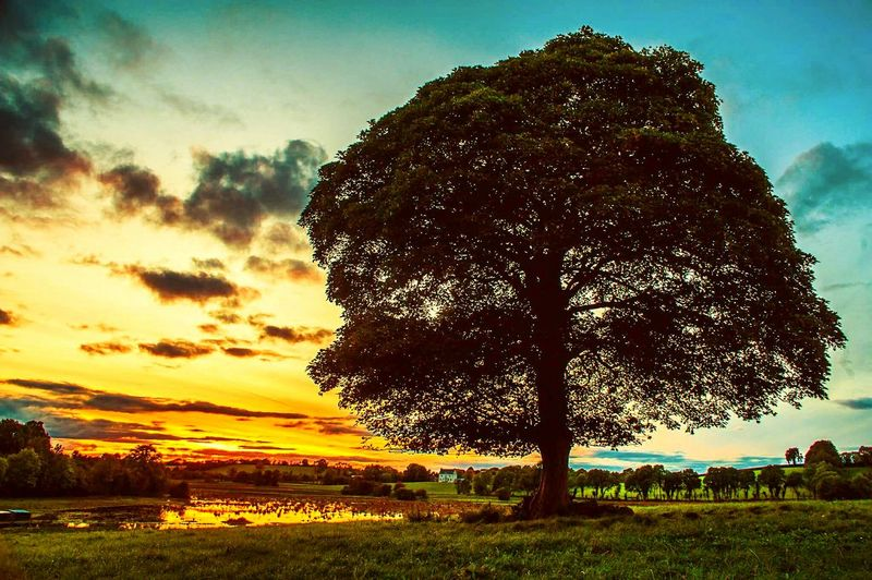 Tree Sunset_collection Cloud - Sky cloud - sky Grass Nature Sky Sunset Field Beauty In Nature Outdoors Tranquility Growth Landscape Scenics Su No People Day Grass Nature Sky Tranquility Growth Landscape Scenics Pixelated