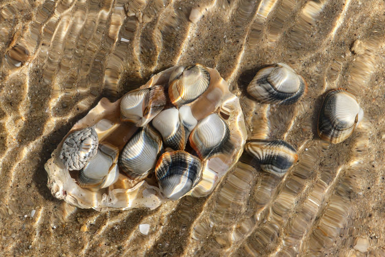 Close-up of seashell in water on beach