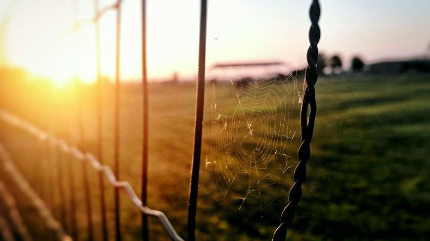 Web Cobweb Sunset Spider Country Wire Sony Xperia Photography. Sony Xperia Z3 Compact Sunny Afternoon Golden Hour