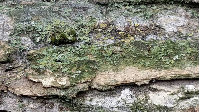 Close-up No People Textured  Outdoors Day Nature Backgrounds Full Frame Tree The Purist (no Edit, No Filter) Tranquil Scene Scenics Beauty In Nature Green Color Growth Tree Bark On Focus