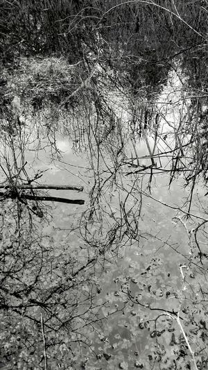 Pond Water Full Frame Reflection No People Nature Outdoors Wet Day Bwfriday Bwphotography Fineartphotography Fineart_bw Fine Art Photography Blackandwhite Bnw_society Fineart_photobw Nature_bnw Abstracted Beauty In Nature Pond Reflections Ponds Pond