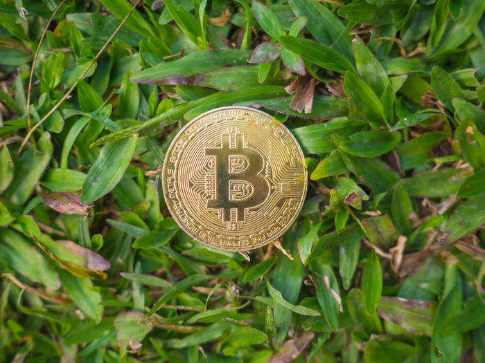 Golden Bitcoin coin on the grass background. Plant Part Leaf Communication Text Close-up Green Color Day No People Growth Plant Circle Directly Above Geometric Shape Nature Outdoors Western Script Focus On Foreground Single Object Number Metal Bitcoin Bitcoin Coin Bitcoin Miner Digital Currency Gold Bitcoin