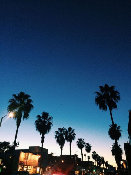 CALIFORNIA Sunset Palm Tree Sky Low Angle View Blue Silhouette No People City Losangeles Los Angeles, California Abbot Kinney