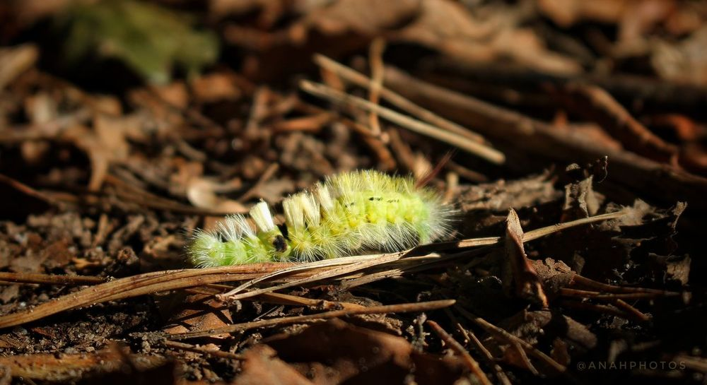 Insect Close-up Forest Butterfly Caterpillar Nature Beauty In Nature Focus On Foreground