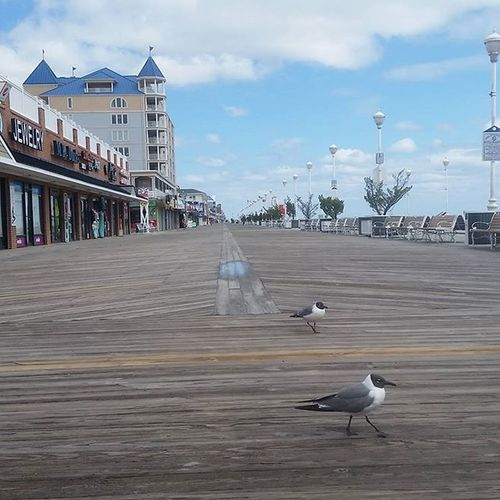 Just a few gulls and a some open shops on the boards.... Oceancitycool OceanCity Maryland Ocmd Loveoc Tourworco Weather Cloudy Boardwalk