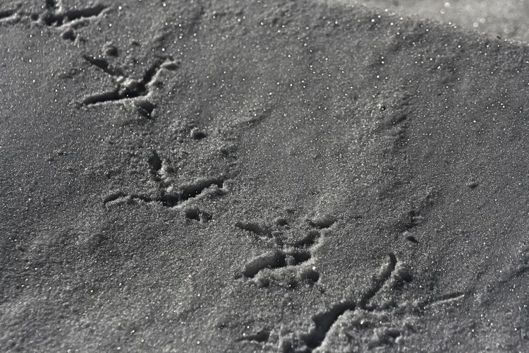 Bird tracks in the snow Land FootPrint No People Print High Angle View Nature Day Track - Imprint Full Frame Close-up Pattern Paw Print Absence Backgrounds Outdoors Winter Wet Animal Track Snow Cold Temperature Frozen Bird Tracks Bird