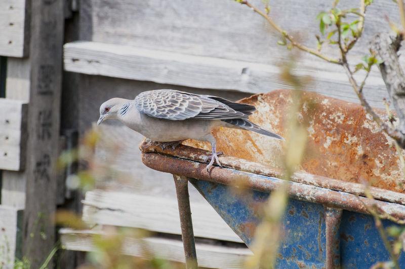 Bird perching on birdhouse