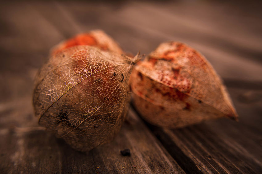 Physalis alkekengi (bladder cherry, Chinese lantern, Japanese-lantern). Food And Drink Food Healthy Eating Fruit Wellbeing Freshness Close-up No People Selective Focus Wood - Material Nut Nut - Food Indoors  Table Brown Still Life Studio Shot Rustic Vegetable Dried Fruit Snack Dieting
