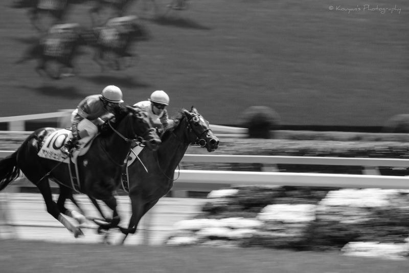 Horses Horse Panning Shoot Racecourse Tokyo Racecource Blackandwhite Black And White Black & White EyeEm EyeEm Best Shots Today, I went to the Tokyo racecource for training of the Panning shoot. Actually, I never bought the tickets of the horse race.