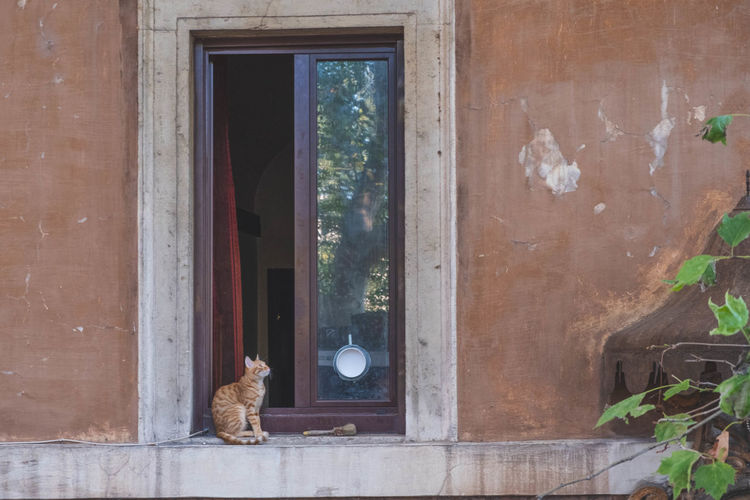 EyeEm Selects EyeEm Streets EyeEm Gallery Animal Animal Themes Architecture Building Exterior Built Structure Cat Day Domestic Domestic Animals Door Entrance Eyeem Streetphotography Feline Glass - Material Mammal No People One Animal Outdoors Pets Transparent Vertebrate Window