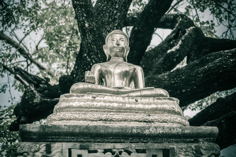 Beautiful golden Buddha image under the big tree in the forest. Wat Suthat Wat Suthat Thepwararam Art And Craft Belief Creativity Day Human Representation Idol Low Angle View Male Likeness Nature No People Place Of Worship Plant Religion Representation Sculpture Spirituality Statue Tree